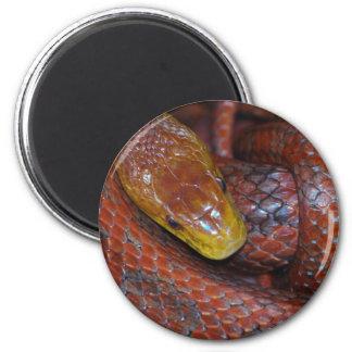 Red Rat Snake Refrigerator Magnet
