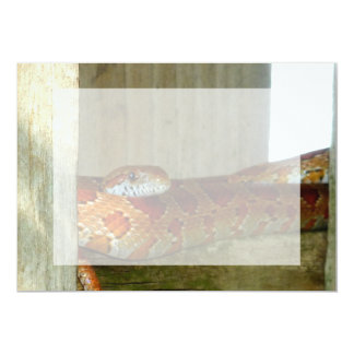 red rat snake side head 5x7 paper invitation card