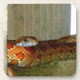 red rat snake side head coasters
