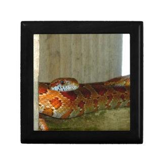 red rat snake side head jewelry box
