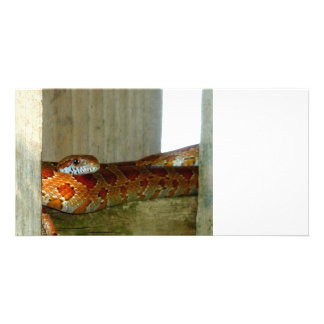 red rat snake side head photo card
