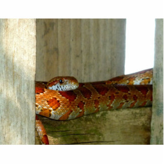 red rat snake side head photo sculpture