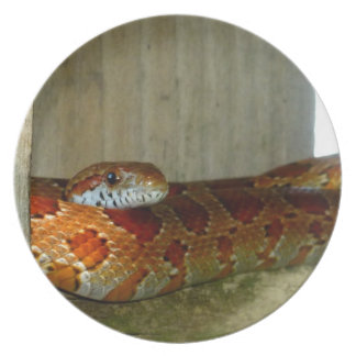 red rat snake side head plates