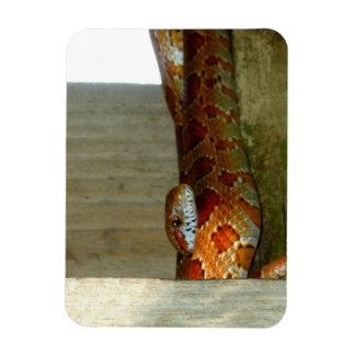 red rat snake side head magnet