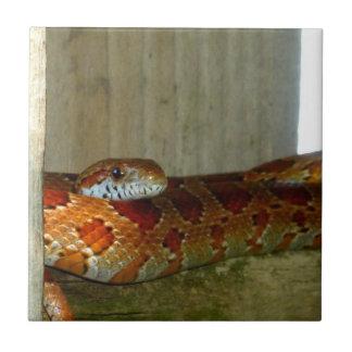 red rat snake side head tile