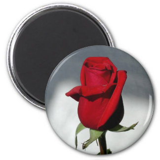 Red red rose 2 inch round magnet
