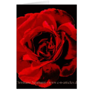 red, red rose card
