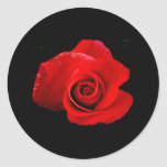 Red Red Rose Classic Round Sticker