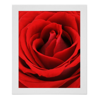Red,Red Rose Fine Art  Photography  24x20 Posters