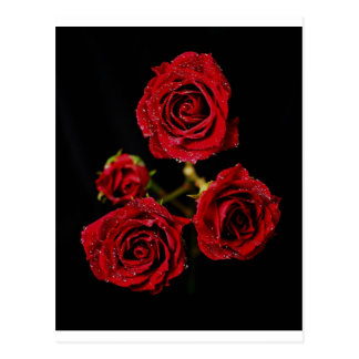 Red Red Rose.... Postcard