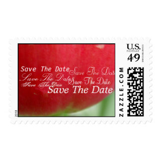 Red Red Tulip Postage Stamp