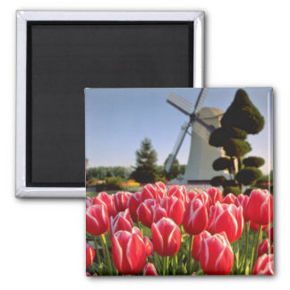 Red Red tulips and windmill flowers 2 Inch Square Magnet