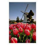Red Red tulips and windmill flowers Print