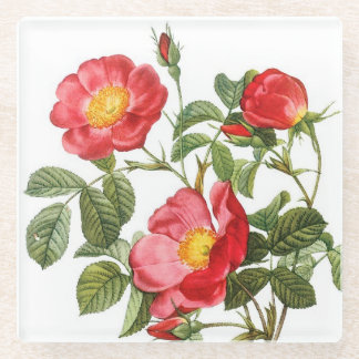Red Redoute Flowers Glass Coaster