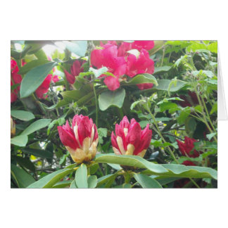 Red Rhodendron Buds Card