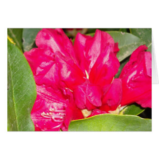 Red Rhodendron Buds Opening Card