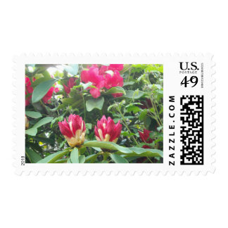 Red Rhodendron Buds Postage