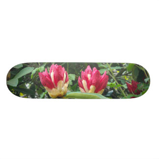 Red Rhodendron Buds Skateboard