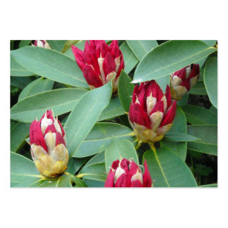 Red Rhododendron Buds Large Business Cards (Pack Of 100)