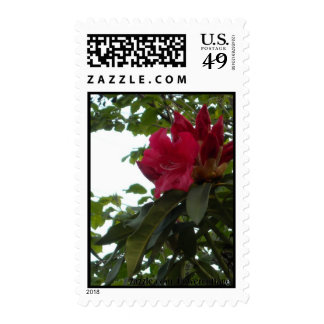 Red Rhododendron Flower and Buds Postage Stamp