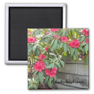 Red Rhododendrons 2 Inch Square Magnet