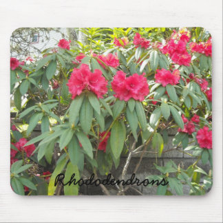 Red  Rhododendrons Mouse Pad