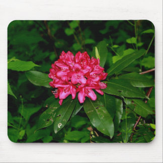 red rhody bloom mouse pad