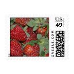 Red, Ripe, Plump, Juicy Strawberries Stamps