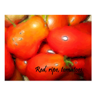 Red, Ripe, Tomatoes Postcard