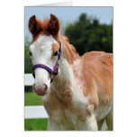 Red Roan Colt Greeting Card
