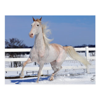 Red Roan in Snow Postcard