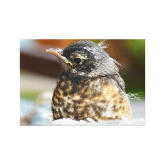 Red Robin Stretched Canvas Prints