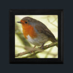 "Red Robin Gift Box<br><div class=""desc"">Gift box with photo of red robin perched on a small branch.</div>"