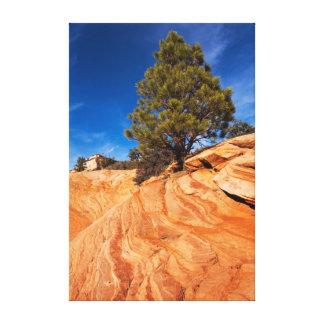 Red Rock Conifer Canvas Print
