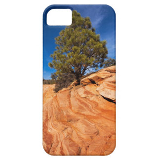 Red Rock Conifer iPhone SE/5/5s Case