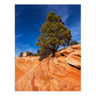 Red Rock Conifer Postcard