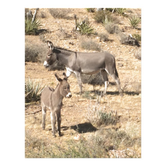Red rock state park nv donkey letterhead