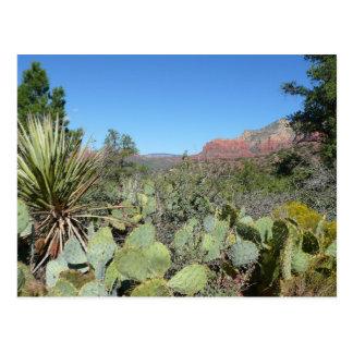 Red Rocks and Cacti I Sedona Arizona Travel Photo Postcard