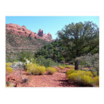 Red Rocks and Cacti II in Sedona Arizona Postcard