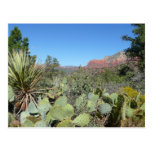 Red Rocks and Cacti Sedona Postcard