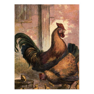 Red Rooster, Brown Hen and Baby Chicks on Straw Postcard