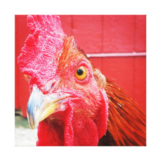Red Rooster Country Kitchen Photo Canvas