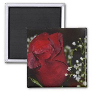 Red Rose-03 Refrigerator Magnets