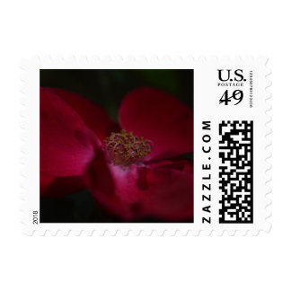 Red Rose 2 Customizable Postage Stamp