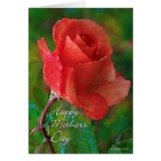 Red Rose-2-HMD