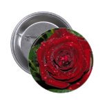 Red Rose #2 Pins