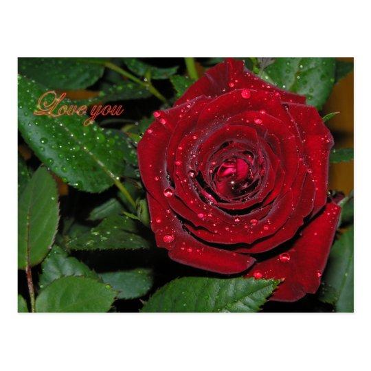 Red Rose #2 Postcard