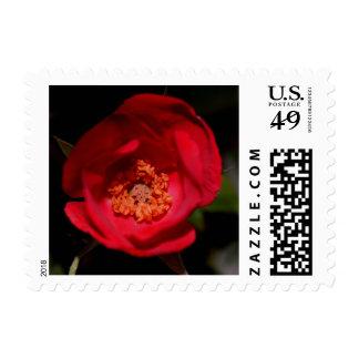Red Rose 3 Customizable Stamp