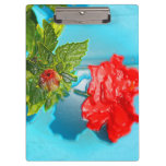 red rose against blue plastic wrap style clipboard