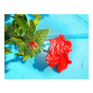 red rose against blue plastic wrap style flyers